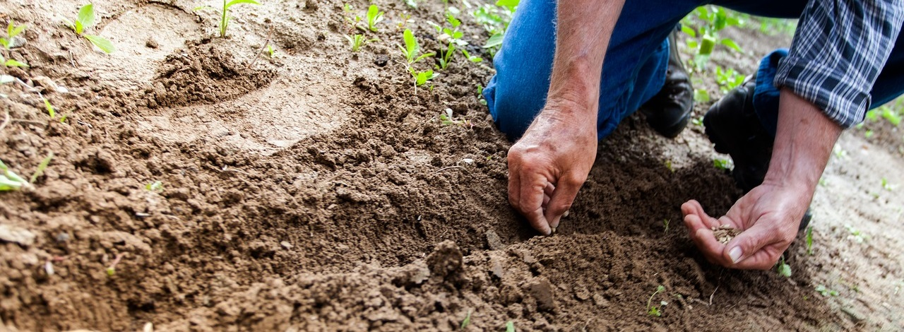 Remember to Sow Good Seeds